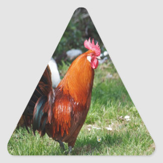 rooster chicken waiting for true love triangle sticker