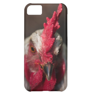 Rooster close up portrait iPhone 5C cases
