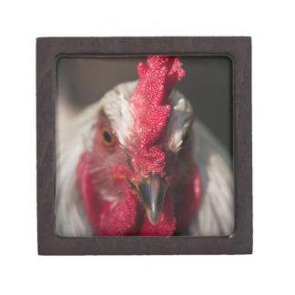 Rooster close up portrait premium keepsake boxes