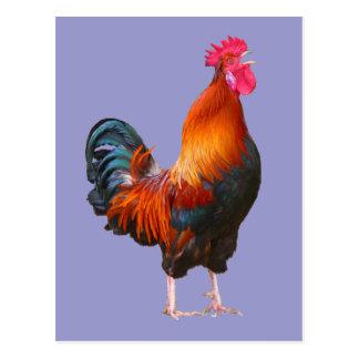 Rooster Crowing Postcard