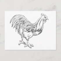 Rooster Drawing Black and White Postcard