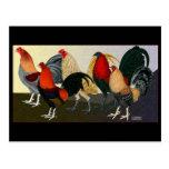 Rooster Dream Team Postcard