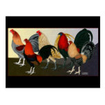 Rooster Dream Team Postcards