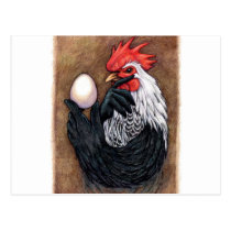 Rooster Egg Drawing Chicken Philosopher Postcard