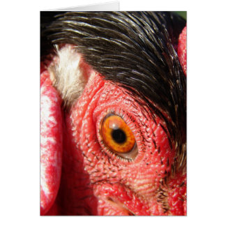 Rooster Eye Card