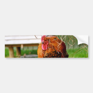 Rooster Farm Animals Nature Photography Bumper Stickers