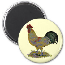 Rooster:  Freestyle Magnet