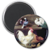 Rooster Hen Chicken Doves Magnet