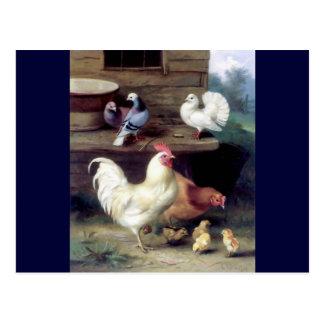 Rooster Hen Chicken Doves Postcard