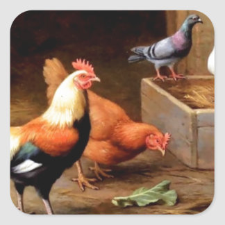 Rooster hen pigeons stickers