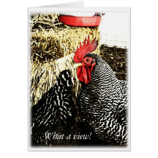 Rooster + Hen Tail, Funny Greeting Card