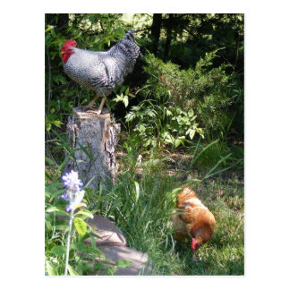 Rooster in the Gardens Postcard