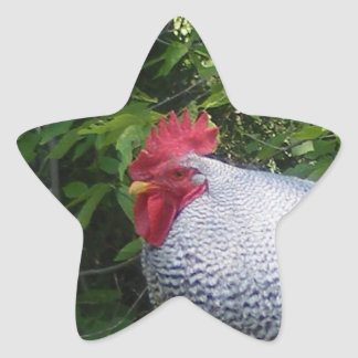 Rooster in the Gardens Star Sticker