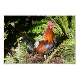 Rooster In The Leaves Poster