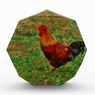 Rooster in the Yard Award