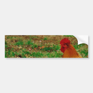 Rooster in the Yard Car Bumper Sticker