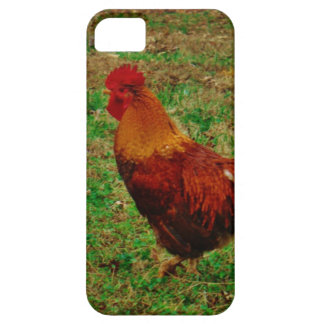 Rooster in the Yard iPhone 5 Cover