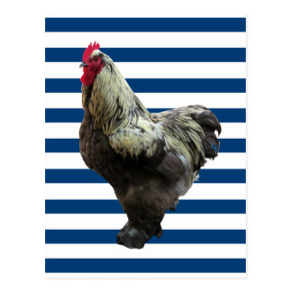 Rooster on blue and white stripes postcard