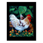 ROOSTER PAINTING POSTCARDS