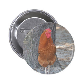 Rooster Pinback Buttons
