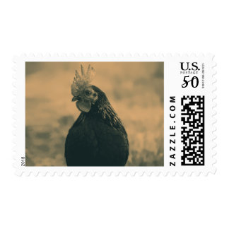 Rooster Portrait in Sepia Postage