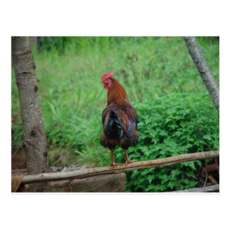 ROOSTER POSTCARD