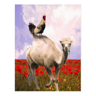 Rooster Prince, the Camel and the Poppy Field! Postcard