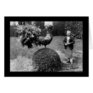 Rooster Shrub at the Villa Trianon 1925 Card