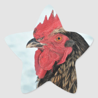 Rooster Star Sticker