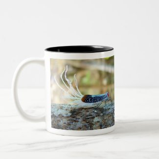 Rooster-tail Cicada (fulgorid planthopper) Two-Tone Coffee Mug