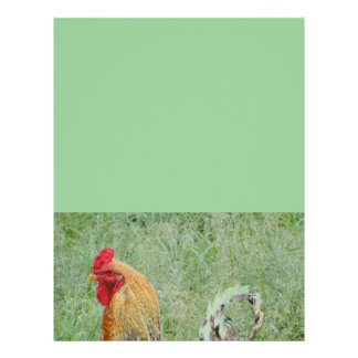Roosters animal farm colorful chicken letterhead