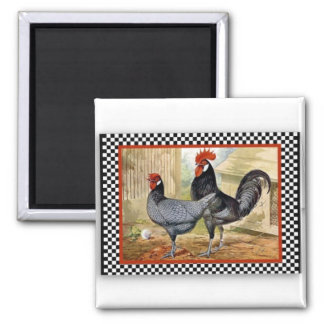 Roosters being Proud 2 Inch Square Magnet