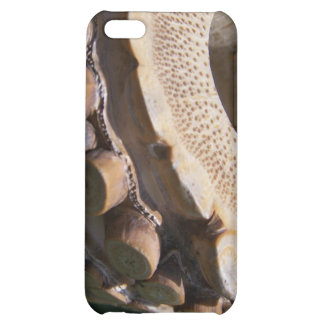 Root End Shakuhachi iPhone 5C Cover