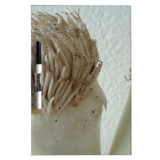 Root of Leek, Vegetables, Healthy Raw White Food Dry-Erase Board