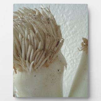 Root of Leek, Vegetables, Healthy Raw White Food Plaque