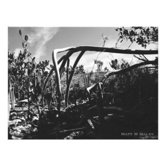Root of Mangrove II Photograph