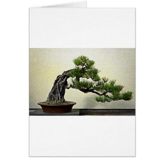 Root Over Rock Pine Bonsai Tree Card