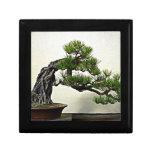Root Over Rock Pine Bonsai Tree Keepsake Boxes