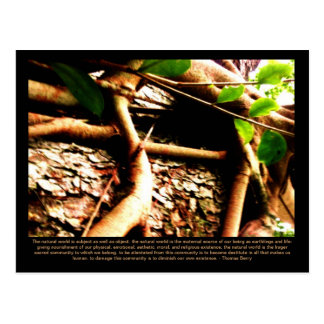 Rooted Earth Postcard