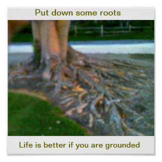 Rooted Poster