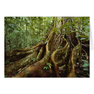 Roots and Trunk of Sloanea Tree Card