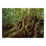 Roots and Trunk of Sloanea Tree Cards