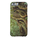Roots and Trunk of Sloanea Tree iPhone 6 Case