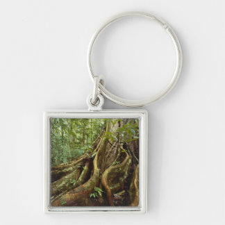 Roots and Trunk of Sloanea Tree Keychain