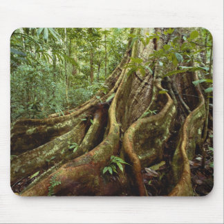Roots and Trunk of Sloanea Tree Mouse Pad