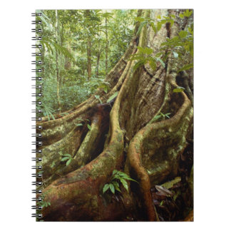 Roots and Trunk of Sloanea Tree Notebook