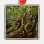 Roots and Trunk of Sloanea Tree Christmas Tree Ornaments