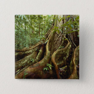 Roots and Trunk of Sloanea Tree Pinback Button