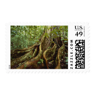Roots and Trunk of Sloanea Tree Postage