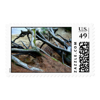 Roots are Strong I Postage